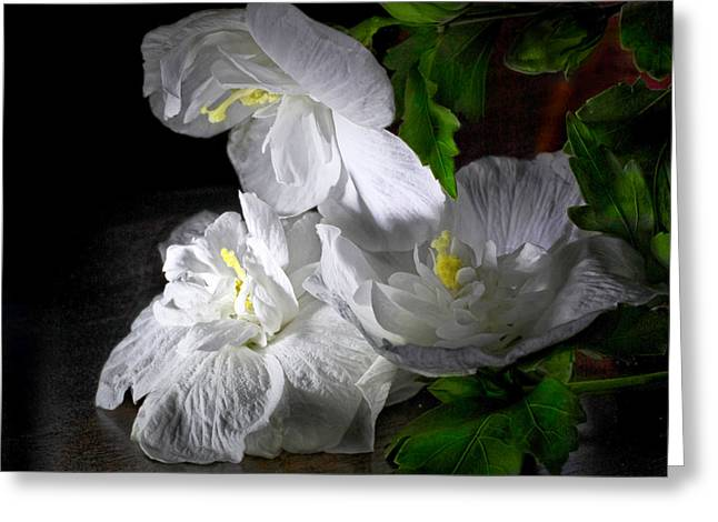 White Blossoms Greeting Card by Robert Och