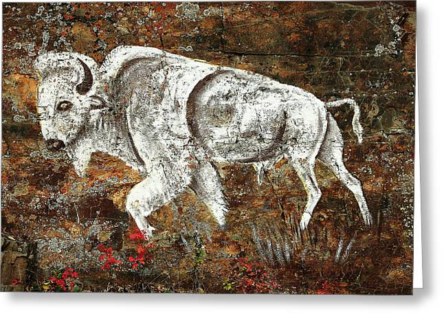 White Buffalo Greeting Card by Todd Klassy