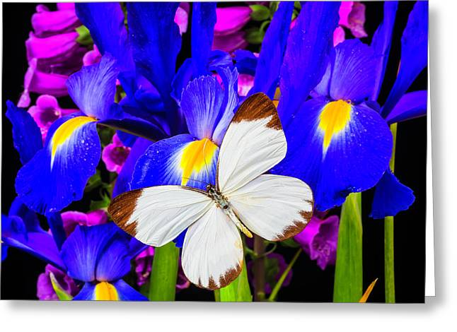 White Butterfly On Blue Iris Greeting Card