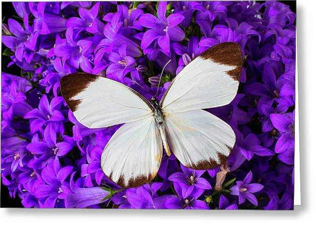 White Butterfly On Campanula Greeting Card
