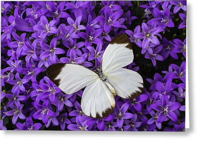 White Butterfly On Campanula Get Mee Greeting Card