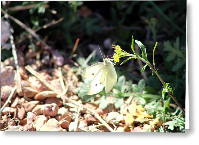 White Butterfly On Goldenseal Greeting Card by Colleen Cornelius