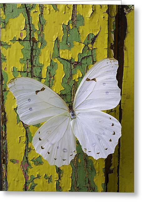 White Butterfly On Old Wall Greeting Card