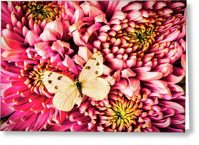 White Butterfly On Spider Mum Greeting Card