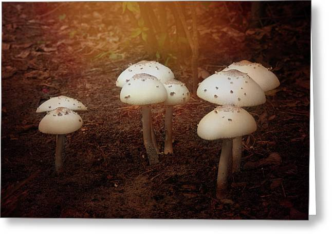 Greeting Card featuring the photograph White Cap Mushrooms by Carolyn Dalessandro