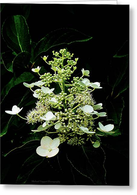 White Chandelier Greeting Card by Michael Taggart II