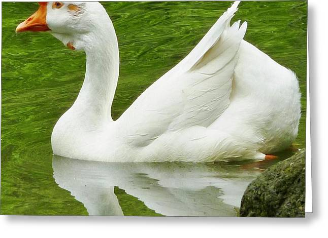 Greeting Card featuring the photograph White Chinese Goose by Susan Garren