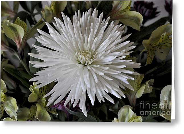 White Chrysanthemum Greeting Card
