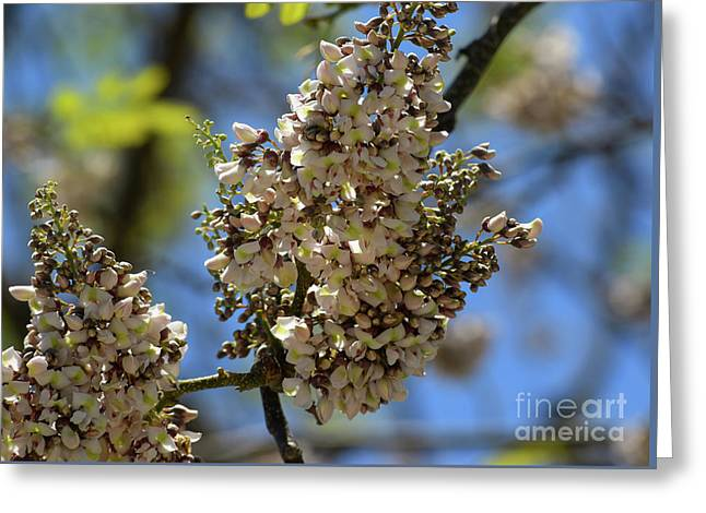 White Clusters With Blue Sky Greeting Card by William Tasker