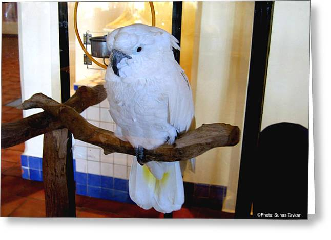 Greeting Card featuring the photograph White Cockatoo by Suhas Tavkar