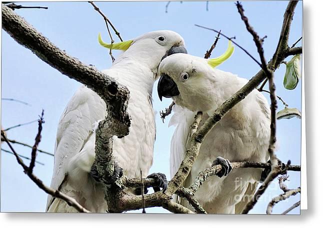 White Cockatoos Greeting Card by Kaye Menner
