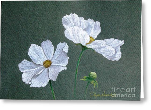 Greeting Card featuring the drawing White Cosmos by Phyllis Howard
