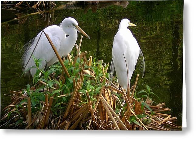 White Cranes Greeting Card by Cynthia Daniel