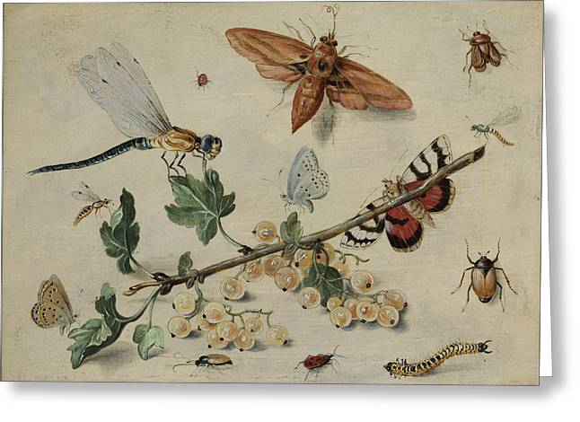 White Currants And Insects Greeting Card