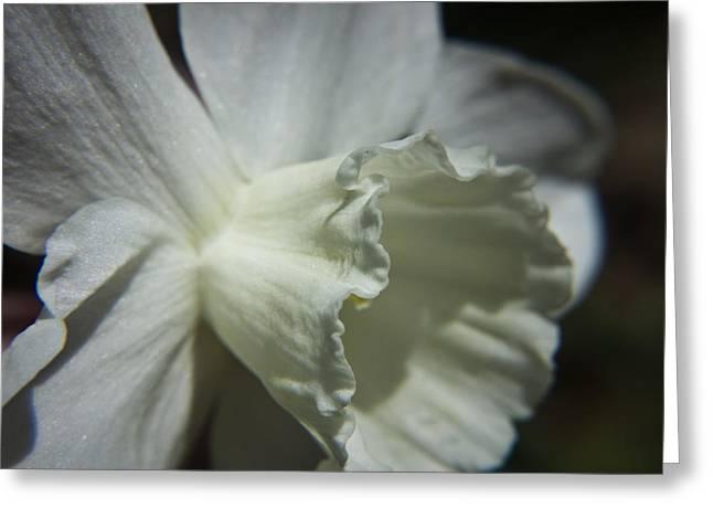 White Daffodil Greeting Card by Teresa Mucha