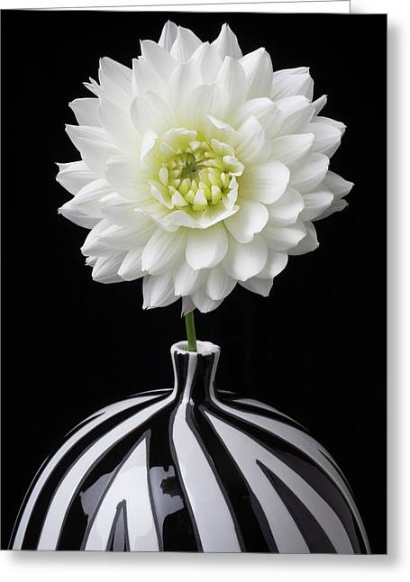 White Dahlia In Big Black And White Vase Greeting Card by Garry Gay