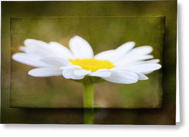 Greeting Card featuring the photograph White Daisy by Eduard Moldoveanu