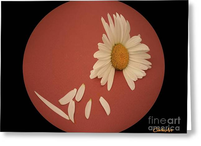 Encapsulated Daisy With Dropping Petals Greeting Card