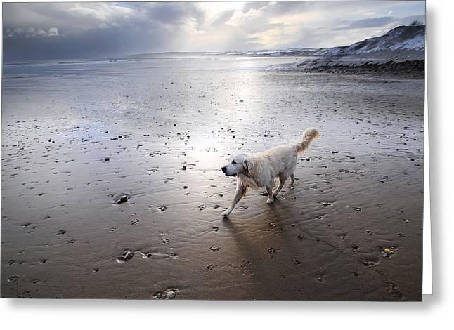 White Dog Greeting Card by Svetlana Sewell