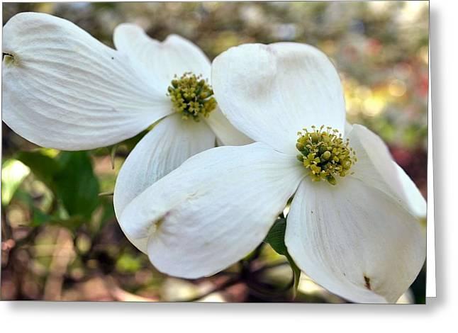 White Dogwood Greeting Card by Deepa Sahoo