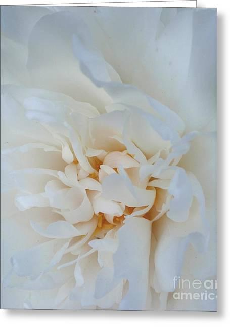 White Dream Greeting Card by Valia Bradshaw