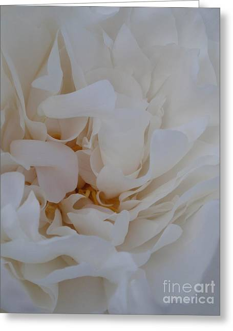 White Dreams Greeting Card