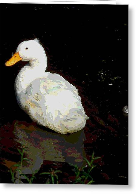 White Duck Swim In Pond 1 Greeting Card