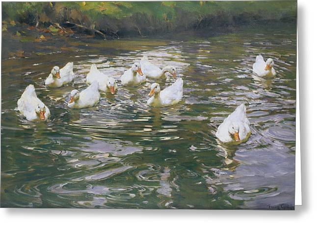 White Paintings Greeting Cards - White Ducks on Water Greeting Card by Franz Grassel