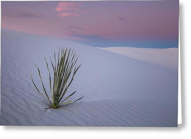 White Dunes Greeting Card
