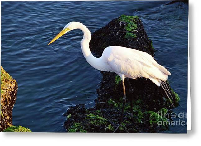 White Egret At Sunrise - Barnegat Bay Nj  Greeting Card