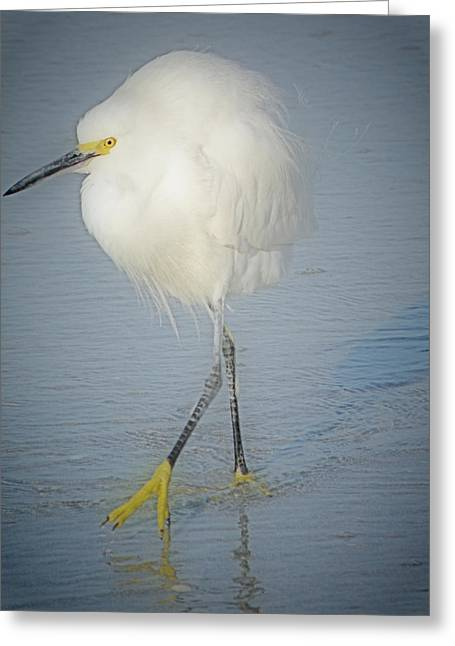 White Egret At Sunrise Greeting Card by Rose  Hill