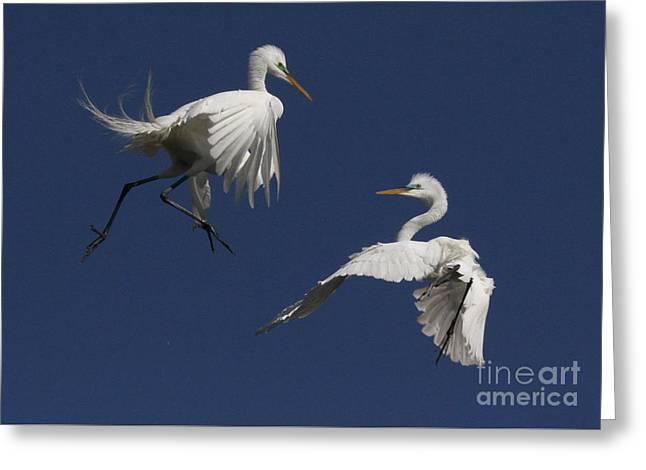 White Egret Ballet Greeting Card by Myrna Bradshaw