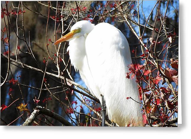 White Egret Bird Greeting Card