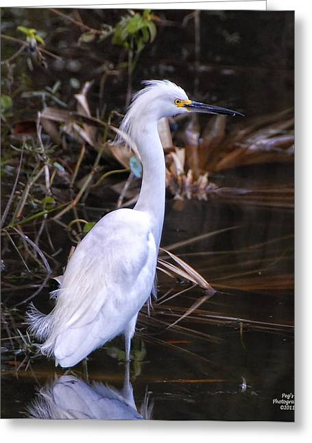White Egret In Florida Pond Greeting Card