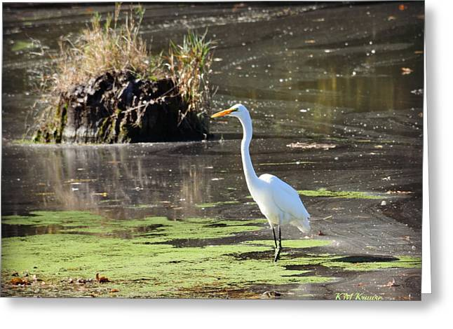 White Egret In The Shallows Greeting Card