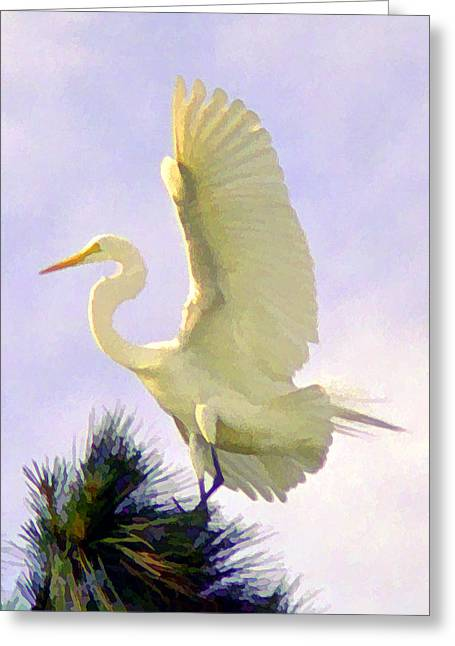 White Egret In Tree Greeting Card by Joel Cohen