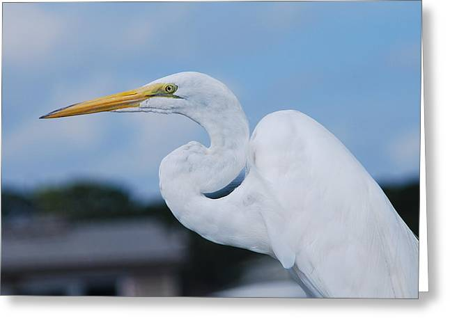 White Egret Greeting Card by Margaret Palmer