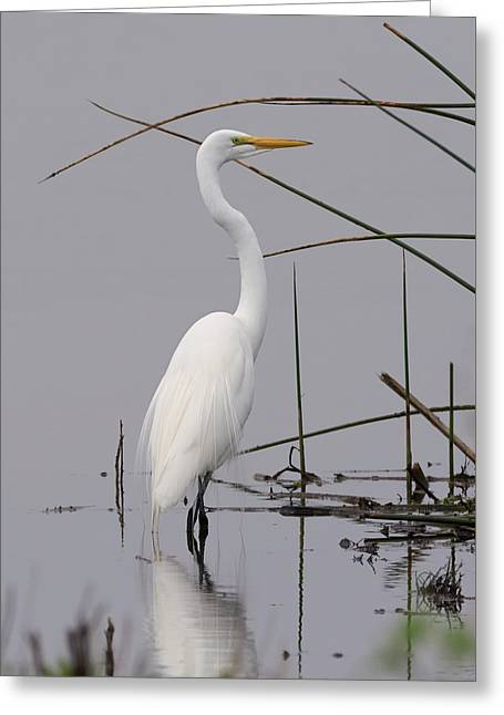 White Egret On A Gray Day Greeting Card by Loree Johnson
