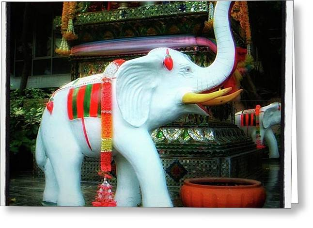 Greeting Card featuring the photograph White Elephant. Meaning A Big Expensive by Mr Photojimsf