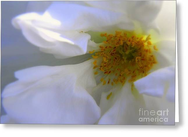 White Greeting Card by Elfriede Fulda