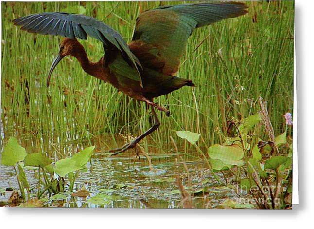 White Faced Ibis 2 Greeting Card by Ruth Housley