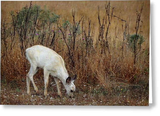White Fawn Greeting Card