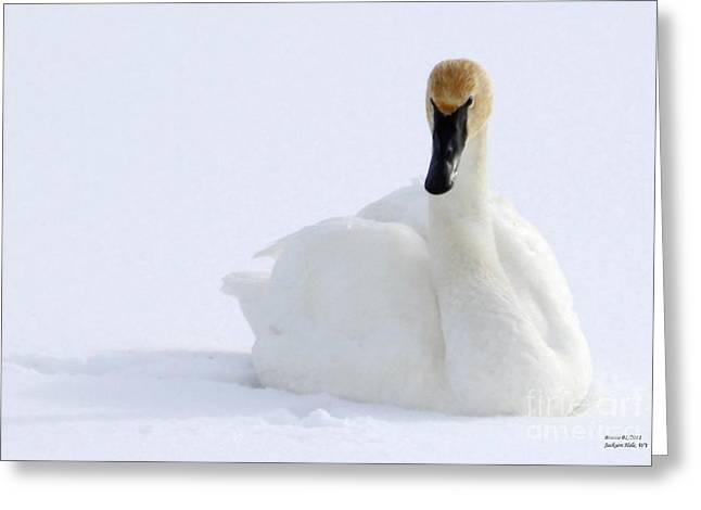 White Feathers On Snow Greeting Card