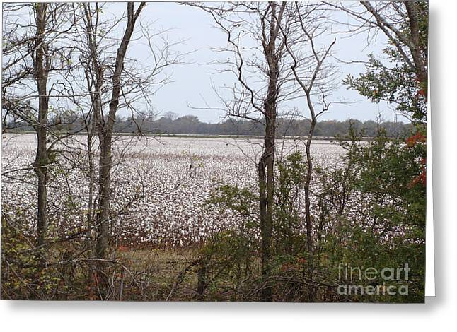White Fields Greeting Card