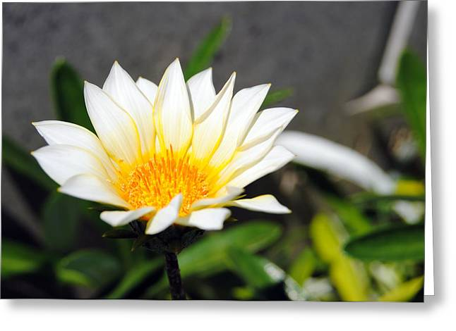 White Flower 3 Greeting Card