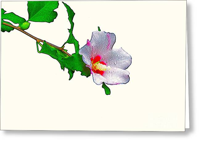 White Flower And Leaves Greeting Card