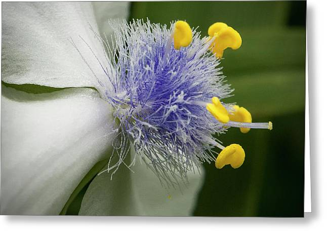 Greeting Card featuring the photograph White Flower by Jean Noren