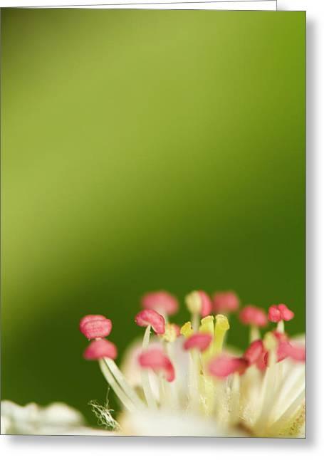 White Flower Greeting Card by Jouko Mikkola