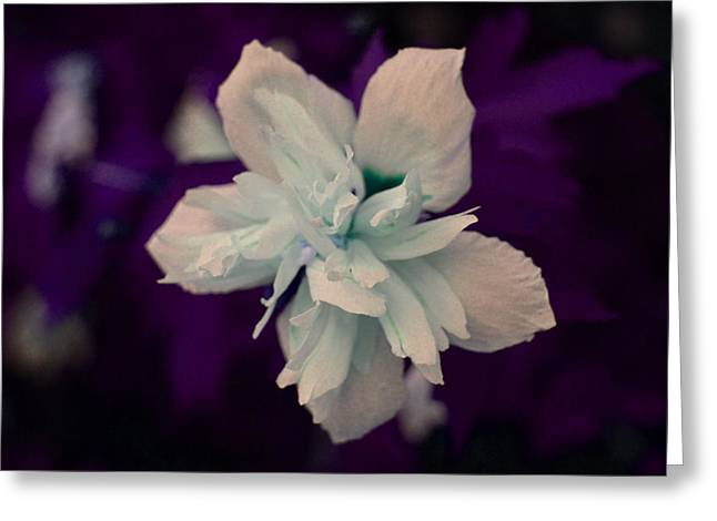 White Flower W/purple Background Greeting Card by Jimi Bush