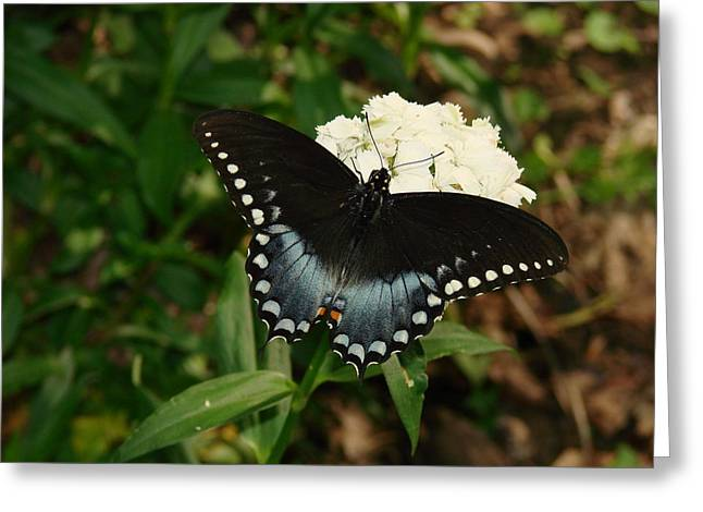 White Flowered Butterfly Greeting Card